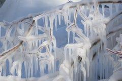 Modelli ghiacciati sui rami lungo la riva Fotografia Stock Libera da Diritti