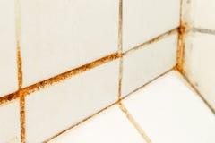 Modelli il fungo e la ruggine che crescono nei giunti delle mattonelle in bagno male arieggiato umido con alta umidit?, il wtness immagini stock