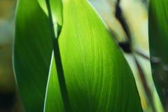 Modelli nelle foglie Immagine Stock