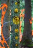 Modelli psichedelici e decorazioni sugli alberi in foresta Immagine Stock