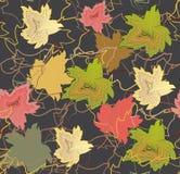 Modelli senza cuciture dalle foglie di acero di autunno dei colori differenti Fotografia Stock