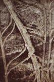 Modellkrukmakeri arkivfoto