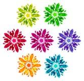 Modello acquerello - un insieme di 7 fiori astratti Immagine Stock