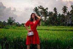 Modello alla moda che tiene la borsa di cuoio del pitone dello snakeskin, attrezzatura elegante Modello in giungla Concetto nella fotografia stock libera da diritti
