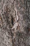 Modello alto vicino del dettaglio del tronco di albero Immagini Stock