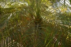 Modello alto vicino del fondo di vista della foglia di palma Fotografia Stock Libera da Diritti