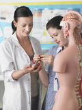 Modello anatomico di With Student Examining dell'insegnante fotografie stock