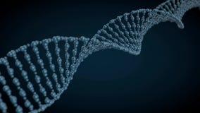 Modello animato della catena del DNA 3d illustrazione di stock