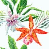 Modello arancio e bianco dell'acquerello delle foglie di palma dell'orchidea Fotografia Stock