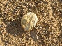 Modello arancio sulla terra con la pietra, struttura Fotografia Stock