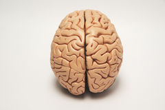 Modello artificiale del cervello umano Fotografia Stock Libera da Diritti