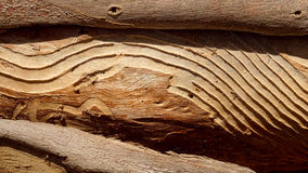 Modello astratto piacevole della termite Immagine Stock