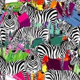 Modello in bianco e nero della zebra, fondo di verniciatura Immagini Stock