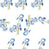 Modello blu dell'iride dell'acquerello Fotografia Stock