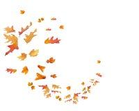 Modello circolare delle foglie di caduta isolate Immagine Stock