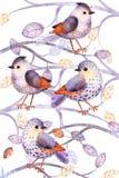 Modello con gli uccelli, foglie, rami Fotografia Stock