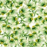 Modello con i camomiles verdi dipinti in acquerello su un fondo bianco Fotografia Stock