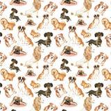 Modello con i cani: Cane di St Bernard, bassotto tedesco, cibo di cibo, barboncino, carlino Acquerello del disegno della mano Fotografia Stock Libera da Diritti