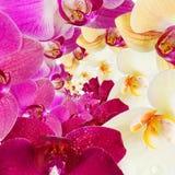 Modello con i fiori delle orchidee Fotografia Stock