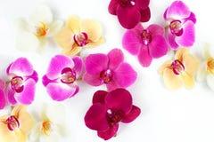 Modello con i fiori delle orchidee Immagine Stock
