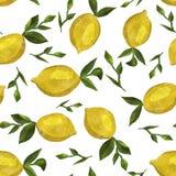 Modello con i limoni dell'acquerello fotografia stock libera da diritti