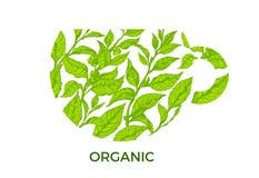 Modello con i rami del tè verde in tazza Simbolo di vettore Fotografie Stock Libere da Diritti