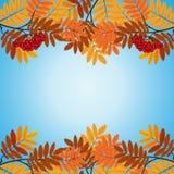 Modello con le foglie di rosso e gialle Fotografie Stock