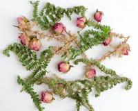 Modello con le rose e le foglie su fondo bianco Progettazione piana Vista superiore dell'immagine Immagine Stock Libera da Diritti