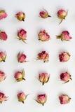 Modello con le rose rosa su fondo bianco Immagine piana di progettazione con la vista superiore Immagini Stock Libere da Diritti