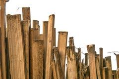 Modello con un grafico di bambù isolato su fondo bianco Immagine Stock Libera da Diritti