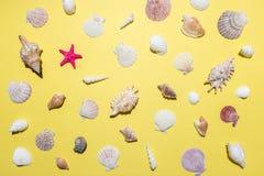 Modello creativo della conchiglia su fondo giallo luminoso Concetto minimo di estate fotografie stock libere da diritti