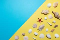 Modello creativo della conchiglia su fondo luminoso Concetto minimo di estate fotografie stock