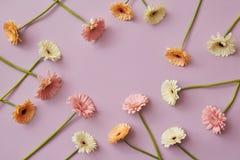 Modello creativo di varie gerbere variopinte su un fondo di carta rosa Immagini Stock Libere da Diritti