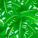 Modello d'annata tropicale con le grandi foglie della banana Fotografia Stock