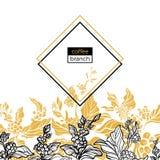 Modello d'avanguardia Il caffè si ramifica con le foglie, i fiori ed i chicchi di caffè naturali Vettore Fotografia Stock