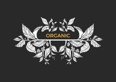 Modello d'avanguardia Rami del tè con le foglie ed i fiori Emblema di vettore Fotografie Stock Libere da Diritti