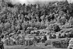 Modello degli alberi Fotografia Stock Libera da Diritti