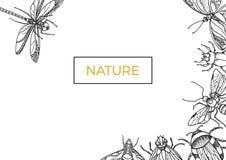 Modello degli insetti su fondo bianco Simbolo di vettore Immagine Stock Libera da Diritti