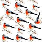 Modello degli uccelli dell'acquerello Immagini Stock