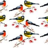 Modello degli uccelli dell'acquerello Immagini Stock Libere da Diritti