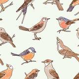 Modello degli uccelli selvaggi tirati Fotografia Stock Libera da Diritti