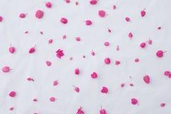 Modello dei fiori rosa della vite di corallo Fotografie Stock Libere da Diritti