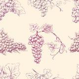 Modello dei mazzi dell'uva Immagini Stock