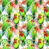 Modello dei pappagalli degli uccelli del cielo piccolo in una fauna selvatica da stile dell'acquerello illustrazione di stock