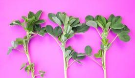 Modello dei petali verdi su un fondo rosa Disposizione piana, vista superiore fotografia stock libera da diritti