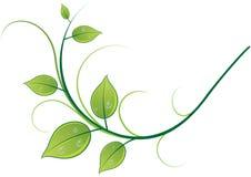 Modello dei ramoscelli e delle foglie Fotografia Stock