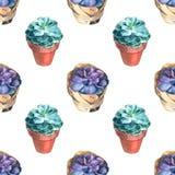 Modello dei succulenti dell'acquerello Struttura senza giunte Fondo di giardinaggio d'annata dipinto a mano Immagini Stock