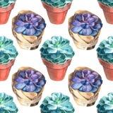 Modello dei succulenti dell'acquerello Struttura senza giunte Fondo di giardinaggio d'annata dipinto a mano Fotografia Stock Libera da Diritti
