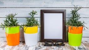 Modello dei telai e delle piante vuoti della foto in di vasi colorati multi su un fondo di legno leggero immagine stock