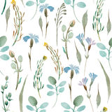 Modello dei wildflowers e delle foglie su fondo bianco Fotografia Stock Libera da Diritti